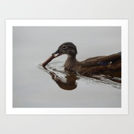 Wood duck stick Art Print