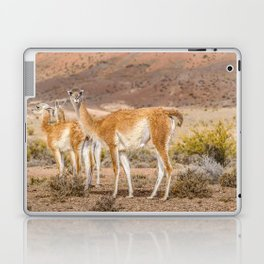 Group of Guanacos at Patagonia, Argentina Laptop & iPad Skin