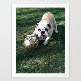 Bulldog Playing Soccer Art Print