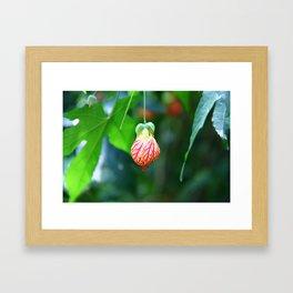 Light Bloom Framed Art Print