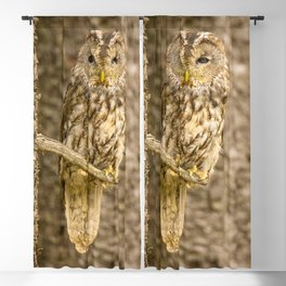 Perched Tawny Owl Blackout Curtain
