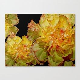Carnation, Dianthus Fantasy 13 Canvas Print