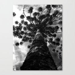 araucaria Canvas Print