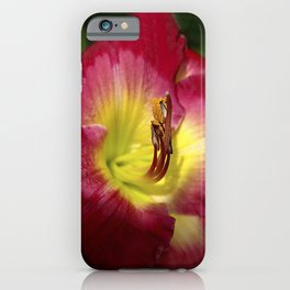 Rich red daylily Joan Derifield iPhone Case