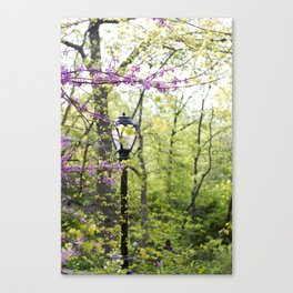 Spring in Central Park #2 Canvas Print