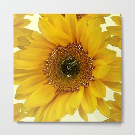 Sunflower 7 Metal Print
