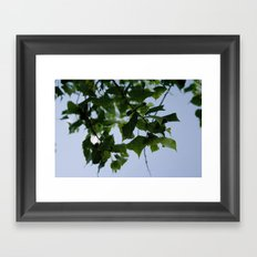 Beautiful Green Leaves From Above Framed Art Print
