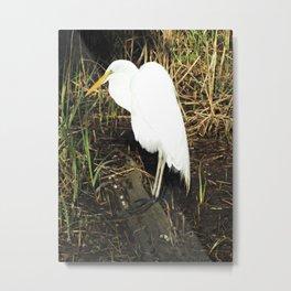Sunlit Egret Metal Print