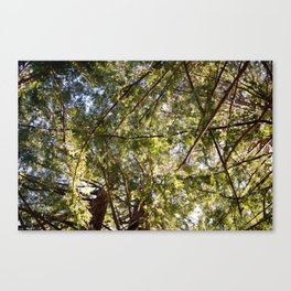 Redwood Ceiling  Canvas Print
