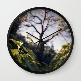 Old Tree, Color Film Photo Wall Clock