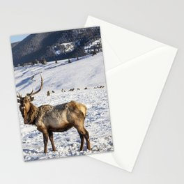Elk at the US Fish  Wildlife Services elk refuge in Jackson Hole Wyoming a valley on the edge of Gra Stationery Cards