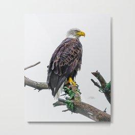 Bemidji Eagle II Metal Print