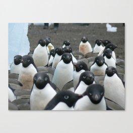 Adelie Penguins 2, Antarctica 2006 Canvas Print