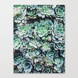 Plants, Succulent, Nature, Modern art, Art, Minimal, Wall art Canvas Print