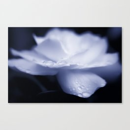 Sweet a beautiful Gardenia flower with water droplets Canvas Print
