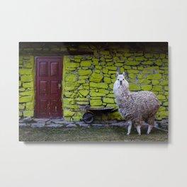 Alpaca By Diego Baravelli Metal Print