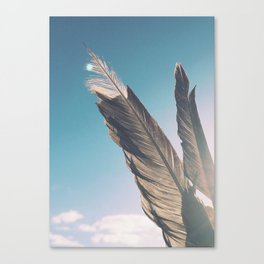 Brown Feathers Canvas Print