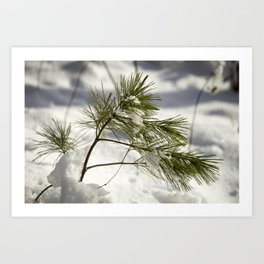 Braced for a Maine Winter Art Print