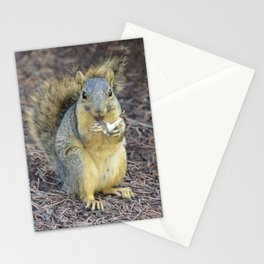 Happy Hungry Squirrel Stationery Cards