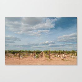 Arizona Vineyard View Canvas Print