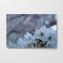 Corner of Cherry Blossoms  Metal Print