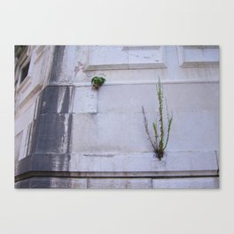 Plants growing on the wall - Venice Canvas Print