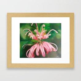 Australia flower Framed Art Print
