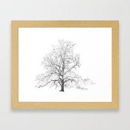 Sycamore Tree Framed Art Print