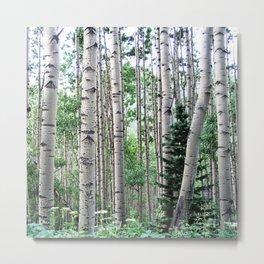 Telluride forest Metal Print
