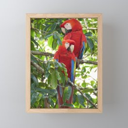 Colorful Macaw Couple Framed Mini Art Print
