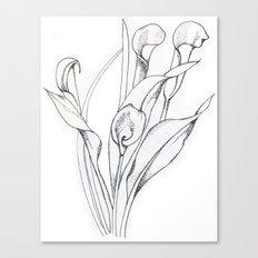 Calla Lily Point Canvas Print