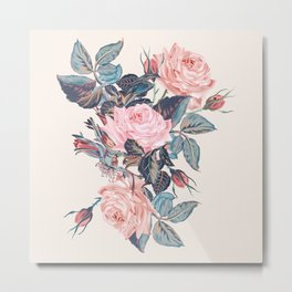 Botanical vector rose illustration in vintage style Metal Print