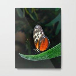 Grace of a Butterfly  Metal Print