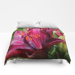 Daylily Comforters