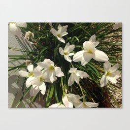 White Brujitas 2 Canvas Print