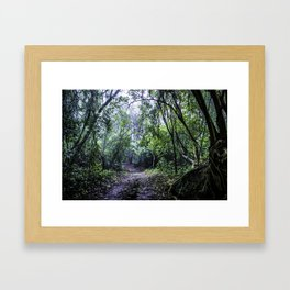 Misty Trail in the Rainforest of the Chocoyero-El Brujo Nature Reserve in Nicaragua Framed Art Print