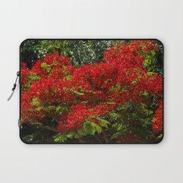 Red flowers on a delonix regia tree Laptop Sleeve