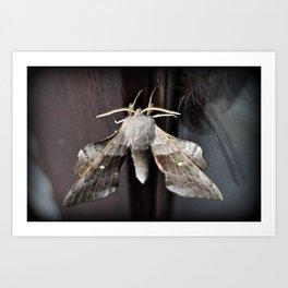Poplar Hawk moth Art Print