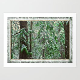 SUNSET SNOW IN CEDARS Art Print