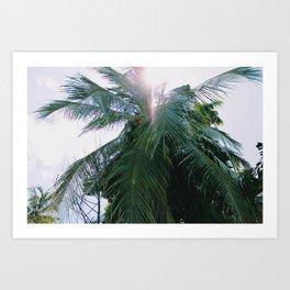 Palm tree & sun Art Print