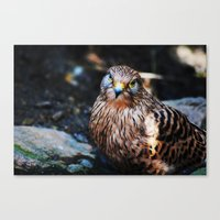 falcon Canvas Prints featuring Falcon by Amee Cherie Piek