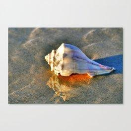 Broken Whelk Canvas Print