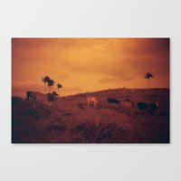 cows Canvas Prints featuring Cows by Melissa Ford