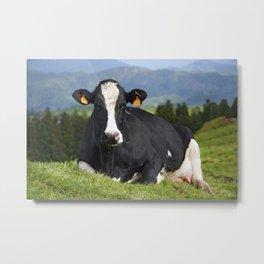 Cow portrait Metal Print