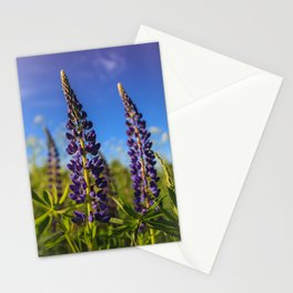 Purple lupines in a Sunny day Stationery Cards
