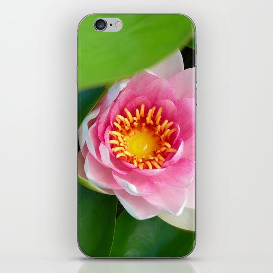 water lily IV iPhone & iPod Skin