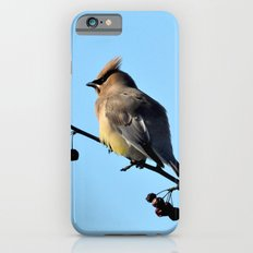 Waxwing on a Winter's Day iPhone 6s Slim Case
