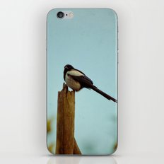 Evening Song iPhone & iPod Skin