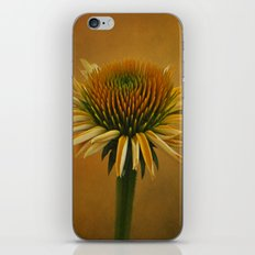 Dressed in Color iPhone & iPod Skin