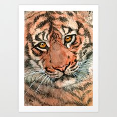 Tiger portrait 884 Art Print